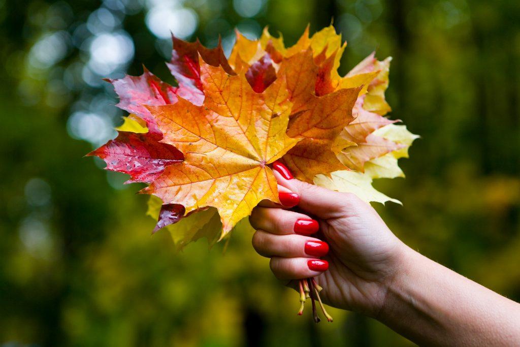 una mano de mujer agarra un ramo de hojas otoñales